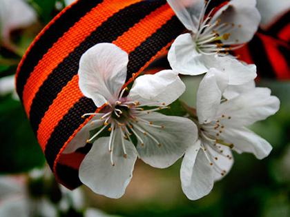 Ленточка Победы на фоне цветов